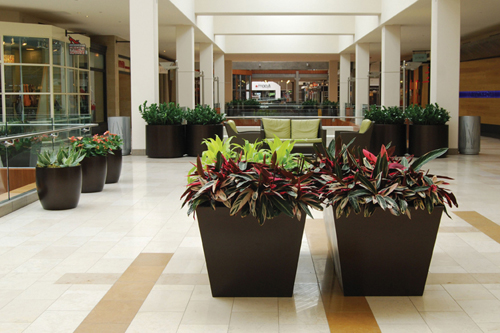 Shopping Mall Common Area Plants