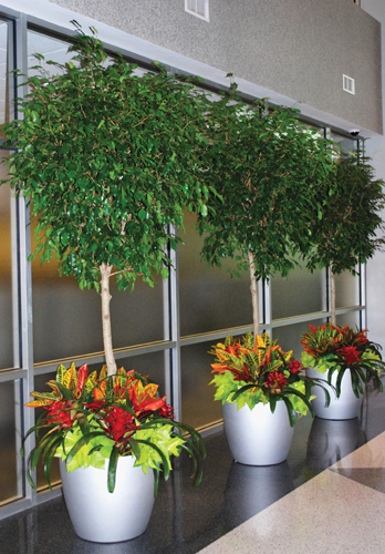 Modern Cylinder Planters - Indoor Plant Service Los Angeles