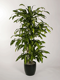 Plant Republic Indoor Plant Service