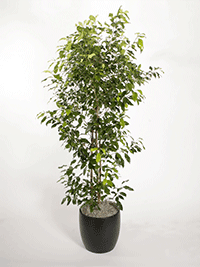 Plant Republic - Indoor Plant Service