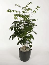 Plant Republic Indoor Plant Service